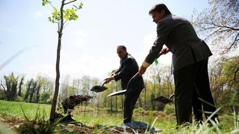 Is there any point in planting new trees? - BBC News | Farming, Forests, Water, Fishing and Environment | Scoop.it
