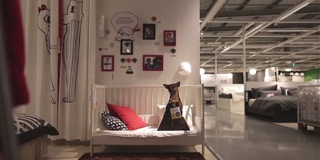 Ikea Advertises Adoptable Dogs In Stores, Because Every Home Needs A Rescue Pup | A Community of Dog | Scoop.it