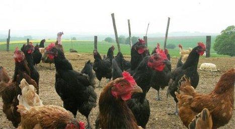 Pour sauver l'élevage, il faut des actes ! | Elections chambre d'agriculteurs 2013 : la Coordination Rurale s'engage | Scoop.it