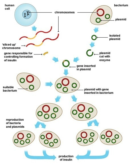 Tips In Writing Genetic Engineering Dissertations and UK Essays - 2 Part | Fun Education | Scoop.it
