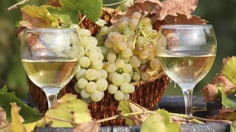 Verdicchio: Venerable Italian grape makes light yet often seductively fleshy white wines | Wines and People | Scoop.it