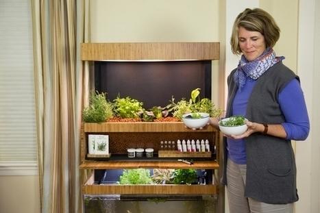 Grove Ecosystem : un écosystème d'agriculture hydroponique d'intérieur   Efficycle   Scoop.it