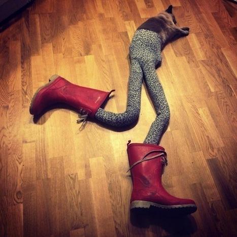 Meowtfit : le mème des chats qui font tomber les bas | THE KIDDING WEB | Scoop.it