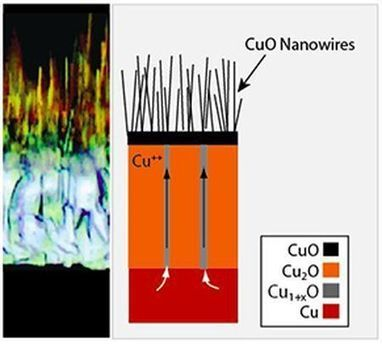 Copper nanowires could become basis for new solar cells | The Copper Universe | Scoop.it