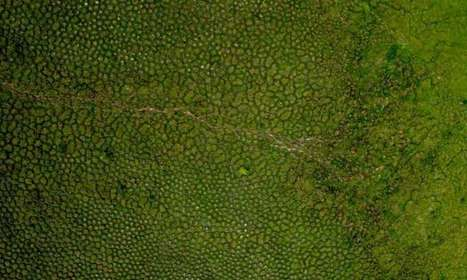 Earthworms build huge mounds dotting tropical wetlands in South America | Forest | Scoop.it