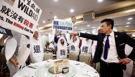 Food for thought: Hong Kong shark fin protesters take campaign directly to diners   Oceans and Wildlife   Scoop.it