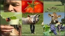 La Bio: un atout pour le climat - Agence Française pour le Développement et la Promotion de l'Agriculture Biologique - Agence BIO | Agriculture biologique | Scoop.it