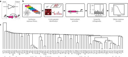 Genomic mining of prokaryotic repressors for orthogonal logic gates   SynBioFromLeukipposInstitute   Scoop.it