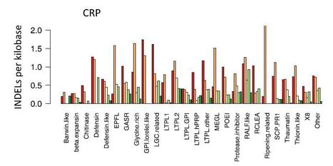 Rapid turnover of antimicrobial-type cysteine-rich protein genes in closely related Oryza genomes | Rice Blast | Scoop.it