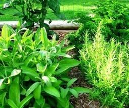 Herb garden planning: Good plants for an indoor container garden | Broad Canvas | Scoop.it