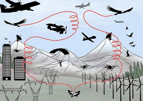 Fogonazos: La batalla de aves y humanos por el espacio aéreo | Educacion, ecologia y TIC | Scoop.it