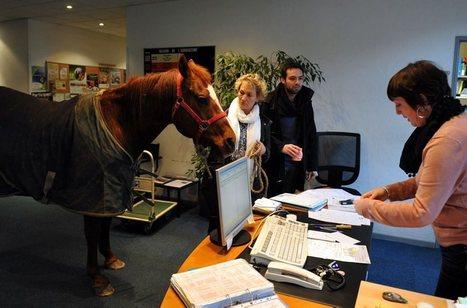 «Pawnnie» met les quatre fers au bureau - ladepeche.fr | Equidés | Scoop.it