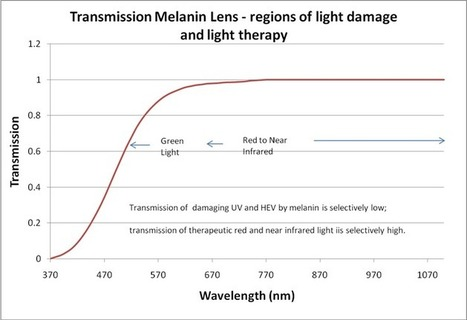 Melanin Products | UV & HEV Protection, Vision Enhancing Filters - And the Eye | Scoop.it