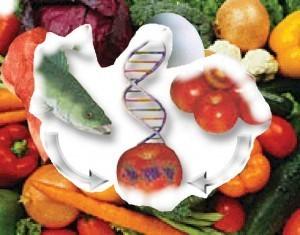 En Argentina se regulan los transgénicos desde 1991 | regulación biotecnología | Scoop.it