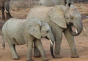 World Wildlife Day: Organized Crime Threat Growing | GarryRogers Biosphere News | Scoop.it