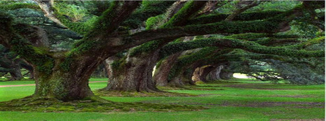 Facebook Cover Image - Trees - TheQuotes.Net | Facebook Cover Photos | Scoop.it