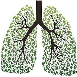 The 9 Best Herbs for Lung Cleansing and Respiratory Support | Holistic Health | Scoop.it