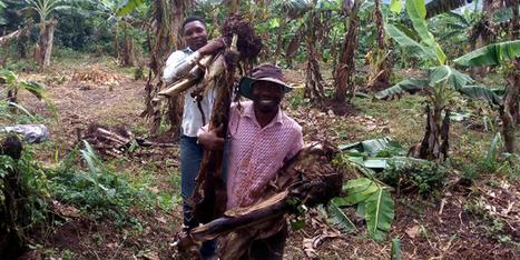 Pourquoi ce nigérian a choisi l'agriculture rurale plutôt qu'un costume et une cravate en ville? | Je, tu, il... nous ! | Scoop.it