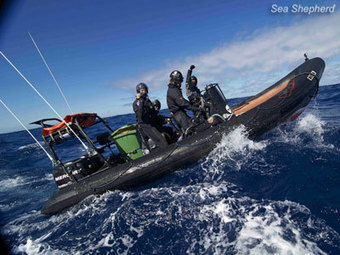 #SeaShepherd :: $9 Challenge: OZT #Fundraising Update and Continuing Appeal | Rescue our Ocean's & it's species from Man's Pollution! | Scoop.it