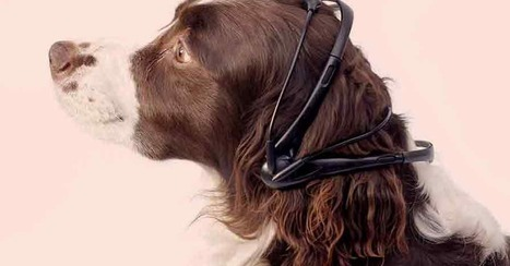 Dog-to-English Translation Headset Gets Funding | Radio Show Contents | Scoop.it