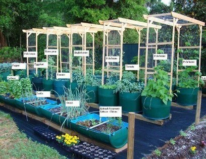 Gardening with barrels | Facebook | Simply Grow Great Food | Scoop.it