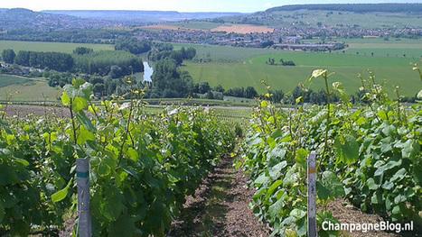 De top 10 grootste champagnemarkten buiten Frankrijk - Champagne Blog | The Champagne Scoop | Scoop.it