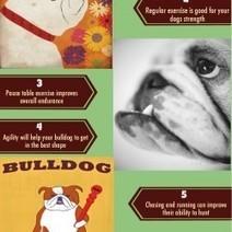 8 Amazing Benefits of Bulldog Agility Training | Visual.ly | Castlewood Bulldogs | Scoop.it