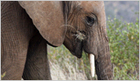 A Story Exposes How the Chinese Government is Fueling Elephant Slaughter | Illegal Wildife Trade | Scoop.it