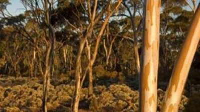 An Ancient Land | Western Australian Museum | Australian History | Scoop.it