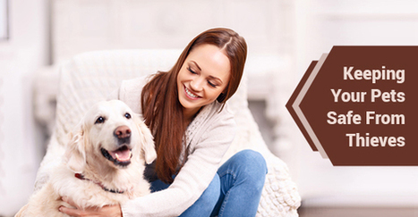 How To Keep Your Pet Safe From Thieves | Decor and Style | Scoop.it
