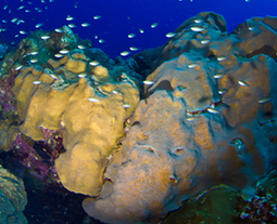 NOAA lists 20 coral species as threatened under the Endangered Species Act | Paneco Press: Species Watch | Scoop.it