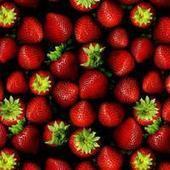 Wild Strawberry Films (wildstrawberryfilms) on about.me | Wild Strawberry Films | Scoop.it