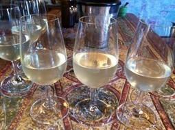 Caroline's Champagne – vins clairs, terroir & savoir faire | Missinwine | Inscription www.viavineo.com place de marche du vin | Scoop.it