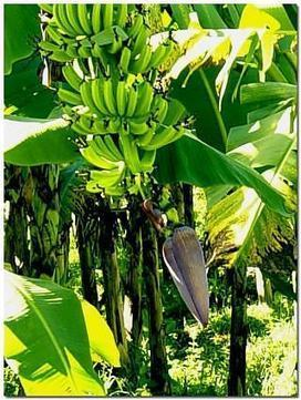 Bananas must be the reason why monkeys are so happy! | What You Resist Persists | Scoop.it