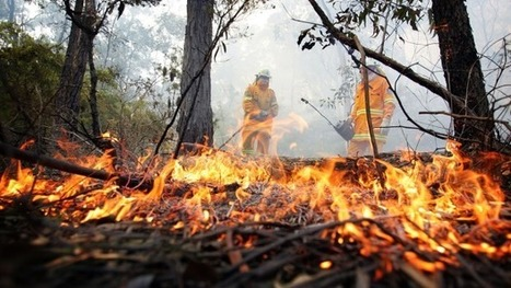 Statistics show the real cause of bush fires across NSW - Sydney Morning Herald | NPWS fire management | Scoop.it