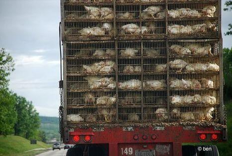 Santé animale (dont animaux de compagnie) : l'industrie se projette dans l'avenir | Services vétérinaires | Scoop.it