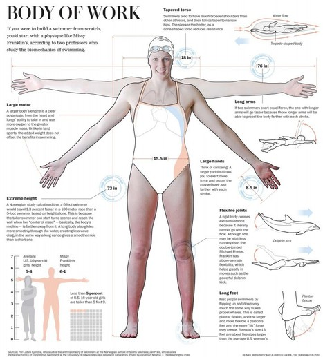 Body of Work: Biomechanics of Swimming (Infographic) - | Sport# Learn#Science | Scoop.it