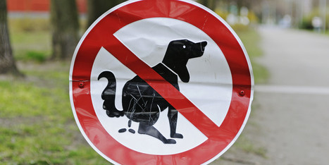 City Planning To DNA Test Dog Poop | Urban Planning | Scoop.it