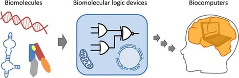 Synthesizing Biomolecule-Based Boolean Logic Gates | SynBioFromLeukipposInstitute | Scoop.it