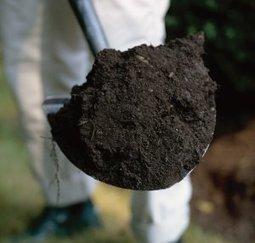 Les herbes aromatiques, tout un programme au potager! | planter des bulbes | Scoop.it