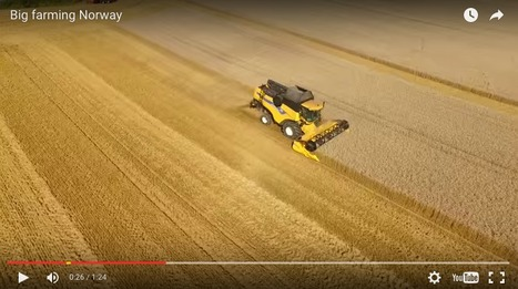 Video: Great footage of the wheat harvest in Norway last year | WHEAT | Scoop.it