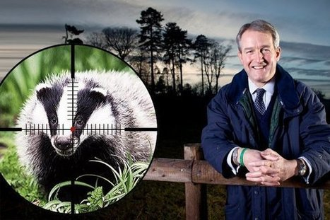 'Hard culling' puts 100,000 badgers in line of fire' | The Sunday Times | Leading for Nature | Scoop.it