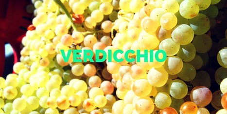 Verdicchio from Le Marche: A good white whine to sample in the good season | Wines and People | Scoop.it
