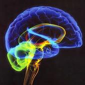 Aterrize: Quanto usamos do nosso cérebro? | Super Dotados | Scoop.it