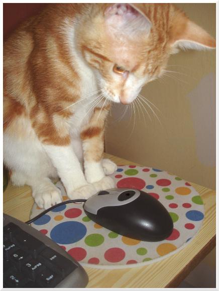 Caring for your Feline Senior Citizen | Going Green | Scoop.it