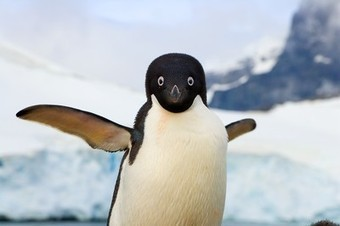 Why Did Penguins Stop Flying? The Answer Is Evolutionary | Everything from Social Media to F1 to Photography to Anything Interesting. | Scoop.it