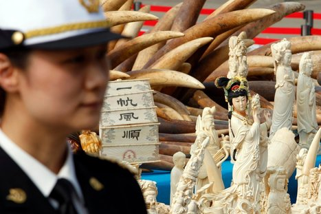 China's Blood Ivory Bazaar | Wildlife Trafficking: Who Does it? Allows it? | Scoop.it