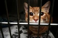 Rabid Cat Attack on 4-Year-Old Boy Ignites Feral Cat Trap-and-Euthanize Plan ... - Opposing Views | Cats | Scoop.it