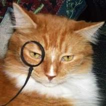 How to Make a Costume Monocle for Your Cat, Kid, or Costume   Wacky Crafts   Scoop.it