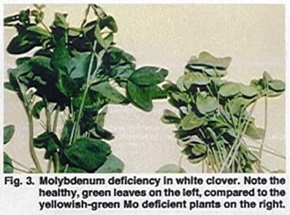 Molybdenum Basics   WHS chem Soil   Scoop.it